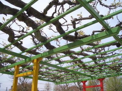 春日井市にある六軒屋公園の藤棚