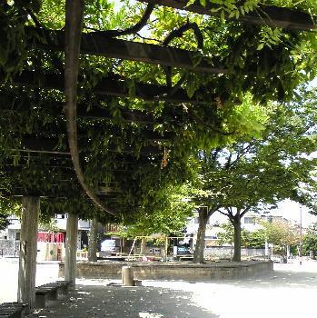 上野公園風景1