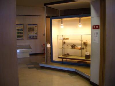 展示館の展示物