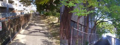 工場か倉庫の壁に生えた蔓と小道