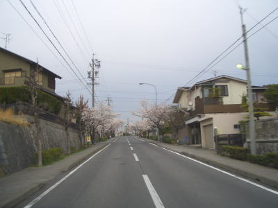 住宅街の桜