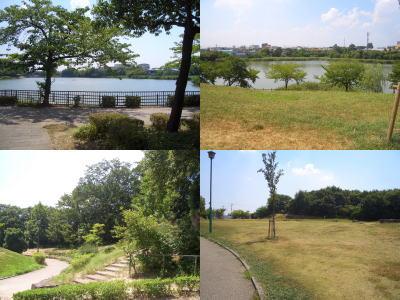 新海池公園の公園内