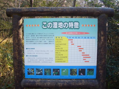 愛知県森林公園の湿地帯