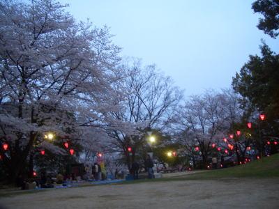 城山公園の夜桜