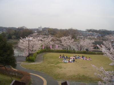 広場で、お花見