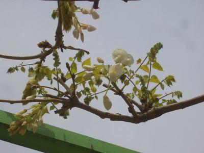 春日井市にある六軒屋公園の藤の花