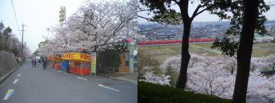 桜まつり風景