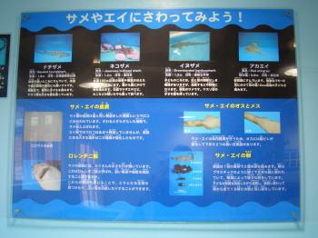 越前松島水族館のサメやエイに触ってみよう