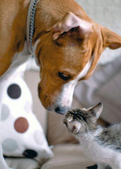 犬猫仲良し1