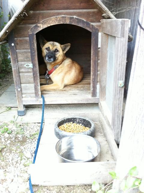 藍色工房 番犬インディ