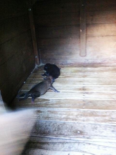 藍色工房 2匹の子犬
