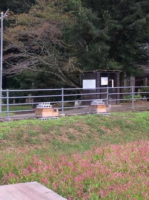 藍の畑にミツバチの巣箱