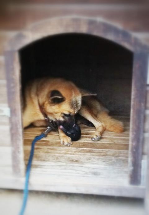 藍色工房 インディと子犬