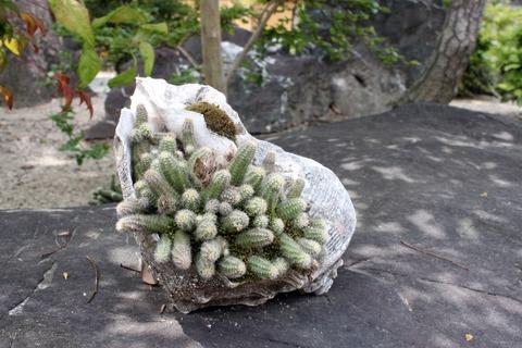 a西林寺3