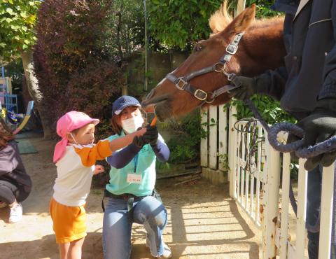 明石 保育園 引き馬1