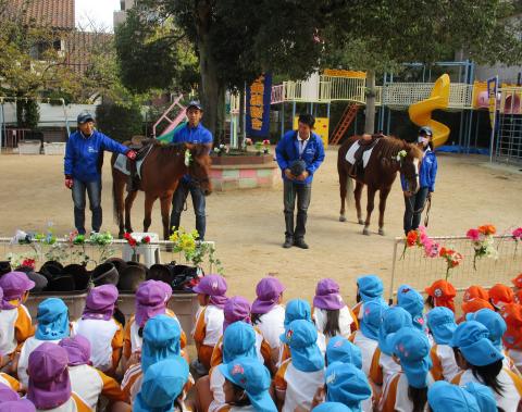 明石 保育園 引き馬体験