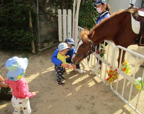明石 保育園 引き馬体験4