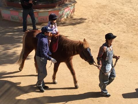 明石乗馬協会3