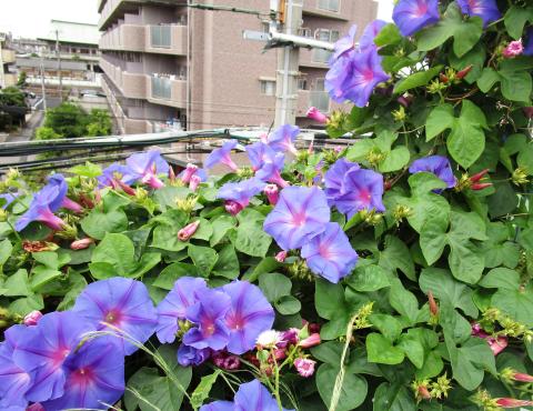 明石 保育園 花