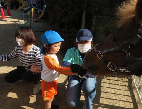 明石 保育園 馬