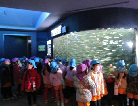 明石 保育園 魚