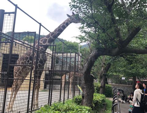 明石 保育園 動物園