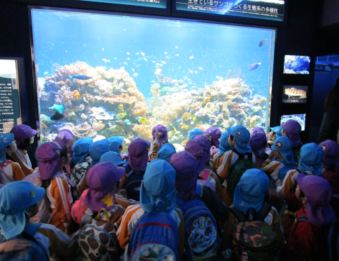 明石 保育園 須磨水族館