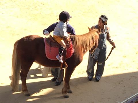明石乗馬協会7