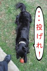 DSC_0978.JPG