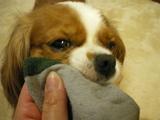 放しませんよ!私の靴下ぁ〜。