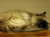 ココで寝てます。