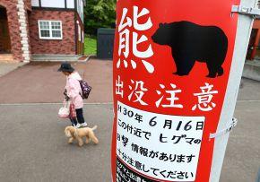札幌「ヒグマが出没するから注意な」 俺「何をどう注意して対策すればいいの?」