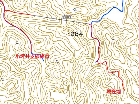 kotsuboi81