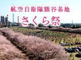 kumagayasakura