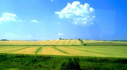 3luglio2006 麦畑