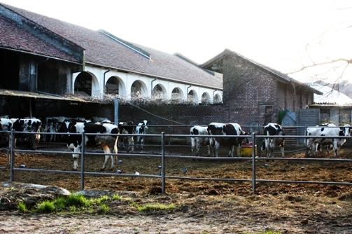 牛舎 14Mar2009