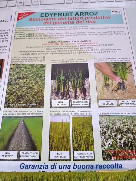 稲作資料2