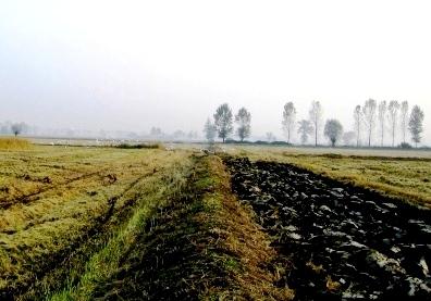 焼かれたあと田んぼの風景