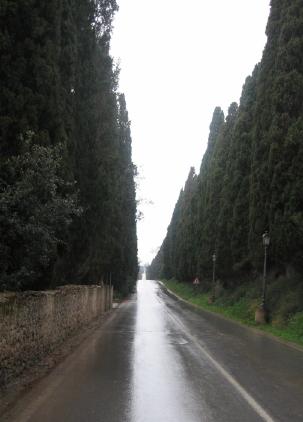 bolgheri 並木道