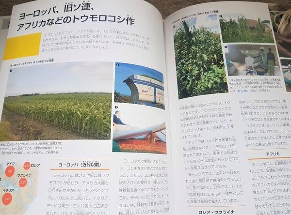 トウモロコシの大百科2