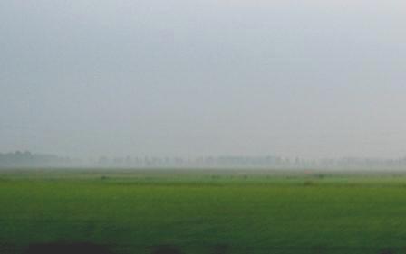 霧の朝 19aug2007
