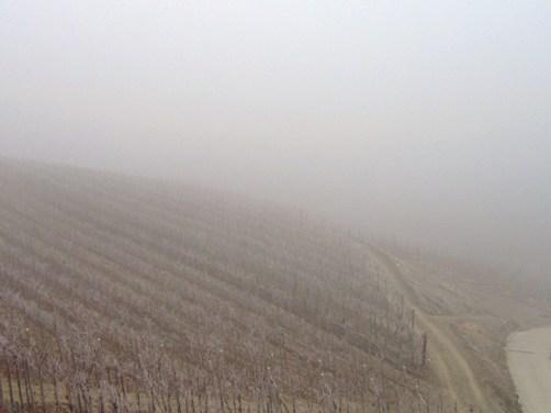 バルバレスコのブドウ畑で