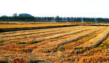 12.ottobre2006 田園風景