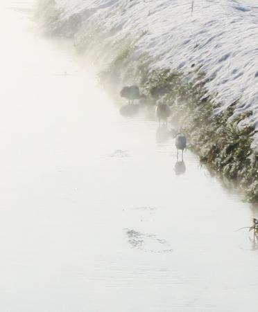 冬の用水路