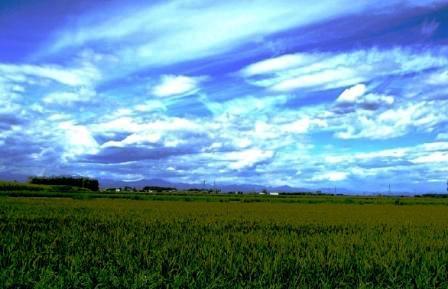 秋の水田と空