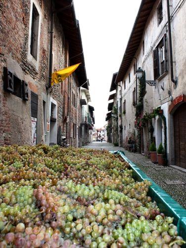 旧市街に到着したブドウ