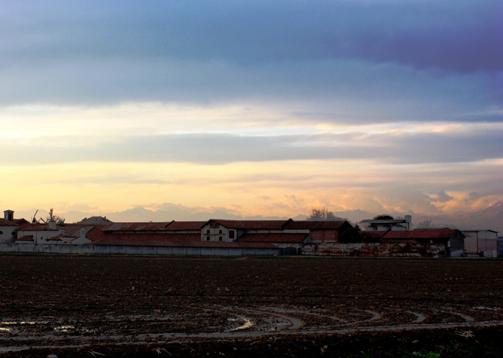 雨上がりの夕方 牛舎で