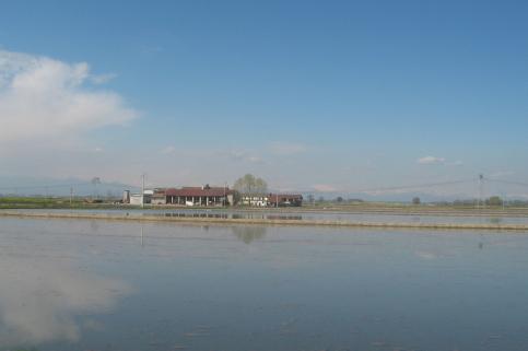 春の水田 12042006
