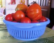庭のトマト