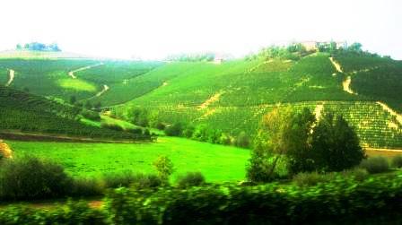 アスティ近郊 朝のブドウ畑